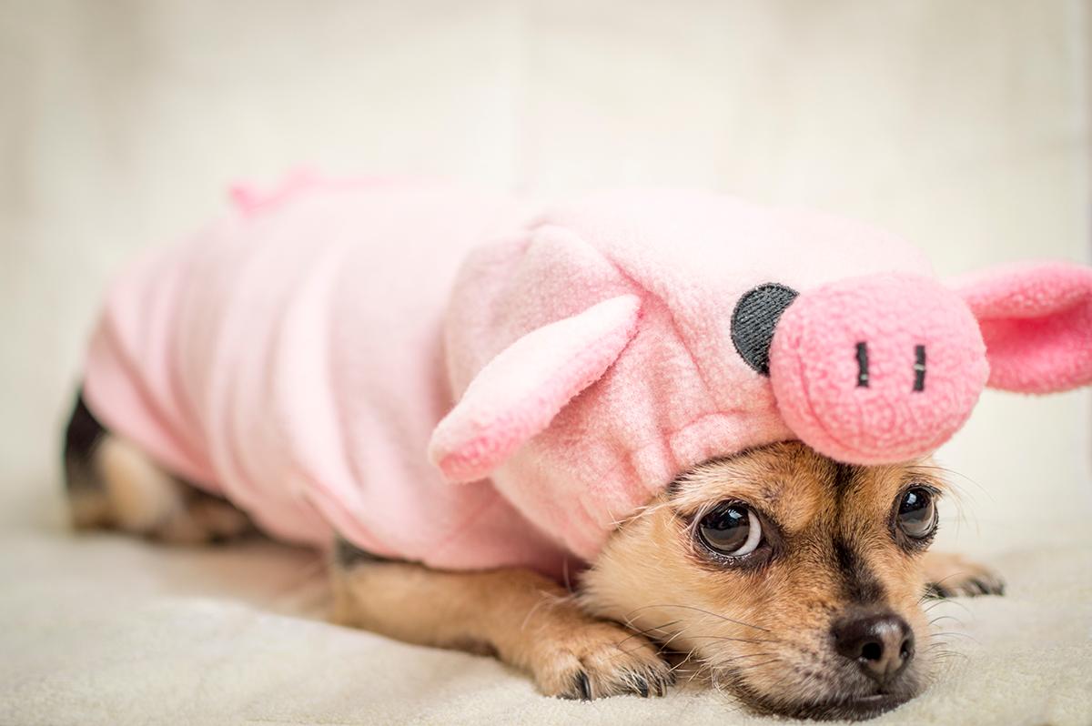 Gewohnheit Schweinehund